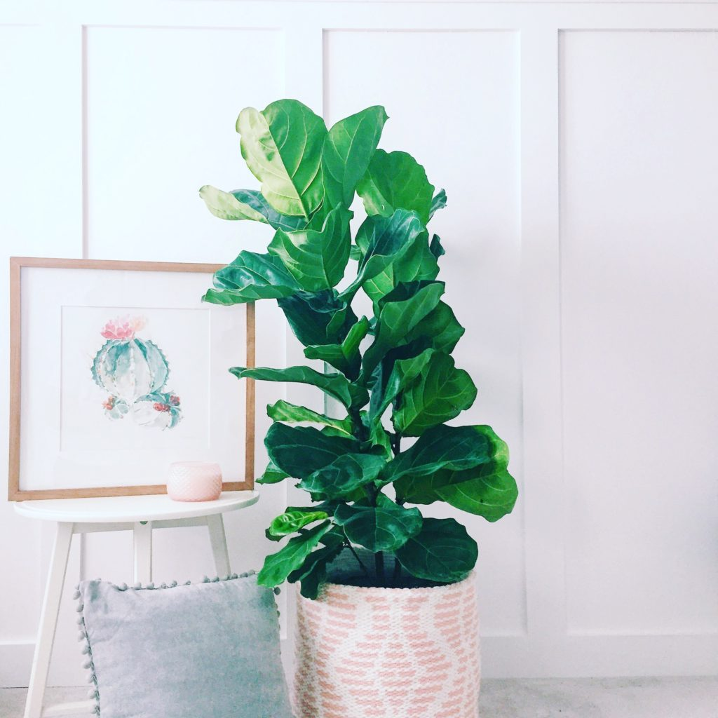 Master Bedroom Board and Batten one room challenge fiddle leaf fig