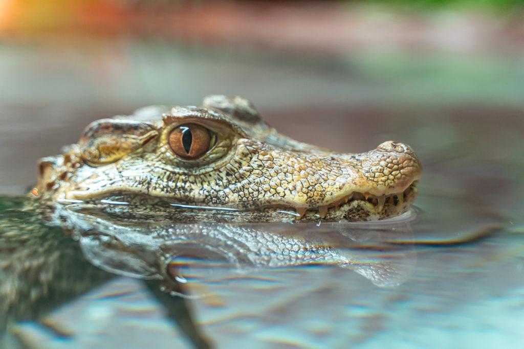 reptilia-york-durham-headwaters